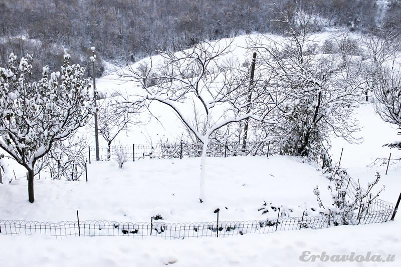 Orto di erbaviola dicembre 2012 annaffiatoi con neve