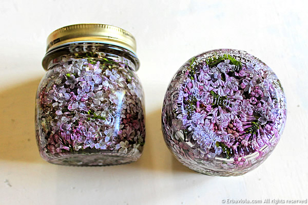 Oleolito di lillà - estrazione a caldo