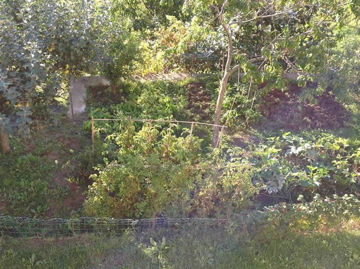 orto di erbaviola settembre 2014
