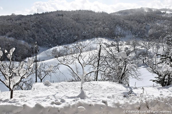 Neve sull'orto di marzo