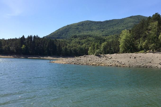 bagno nel lago, pineta sullo sfondo