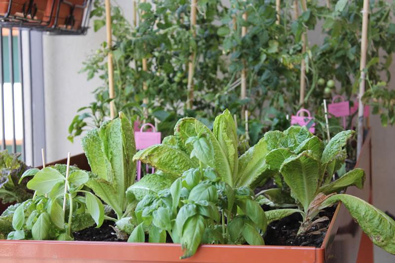 Orto sul balcone - tavolo da orto - erbaviola.com