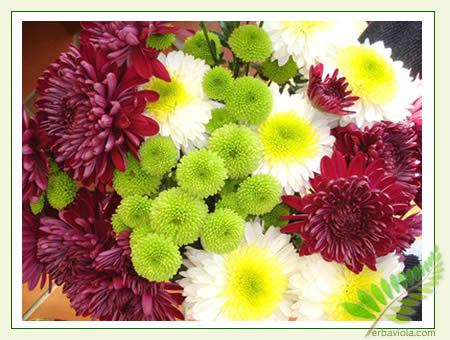 frontediliberazionedelcrisantemo.jpg